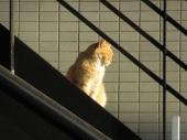 小田急小田原線本厚木駅の一棟売りビル